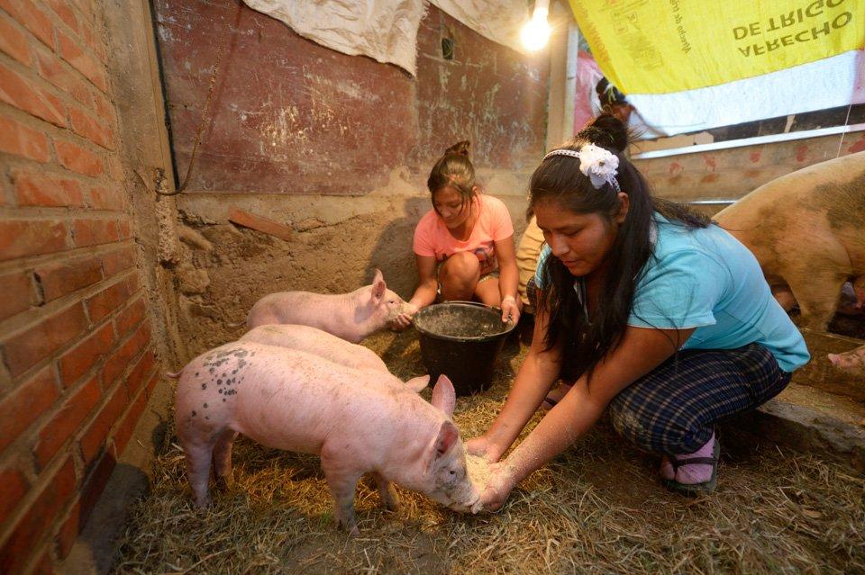 Schweinezucht in der eigenen Landwirtschaft des Kinderheims. (Foto: Florian Kopp/SMMP)