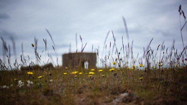 Blumen am Strand (Foto: Andreas Beer)